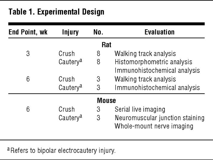 classification of head injury pdf